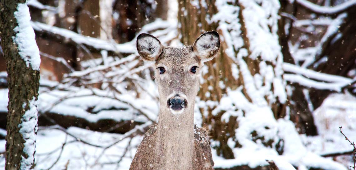 Wild in einer Winterlandschaft